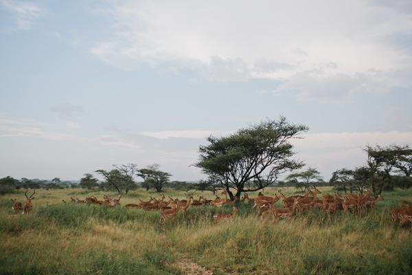 Tanzania-BLOG-03
