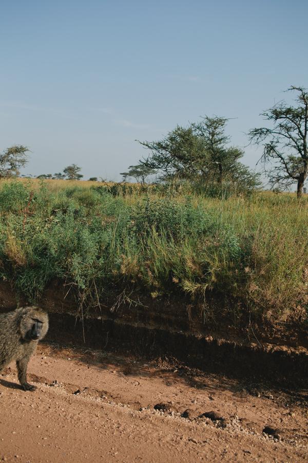 Tanzania-BLOG-34